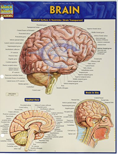 Brain (Fold-out book or chart): Vincent Perez
