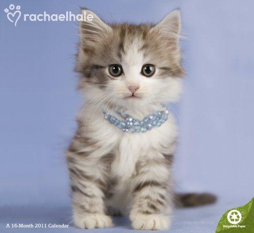 9781423803799: 2011 Rachael Hale Cats Wall Calendar