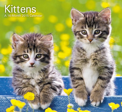 9781423823766: Kittens Mini Calendar (2015)