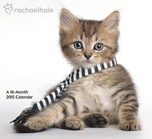 9781423823773: Rachael Hale Cats Wall Calendar (2015)