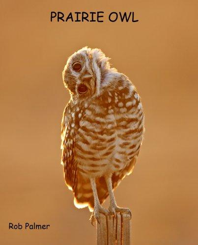 Prairie Owl: Palmer, Rob