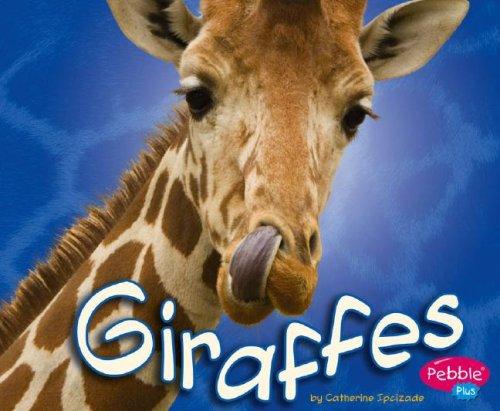 Giraffes (African Animals): Ipcizade, Catherine