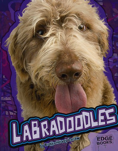 9781429620093: Labradoodles (All About Dogs)