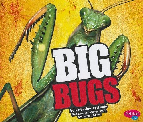 9781429633178: BIG Bugs