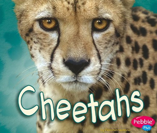 9781429648783: Cheetahs (African Animals)