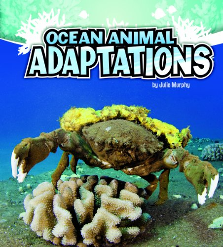 9781429670296: Ocean Animal Adaptations (Amazing Animal Adaptations)