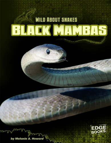 9781429672818: Black Mambas (Wild about Snakes)