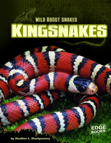 9781429672856: Kingsnakes (Wild about Snakes)