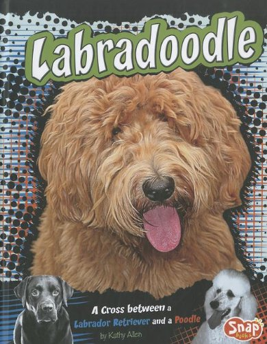 9781429676663: Labradoodle: A Cross Between a Labrador Retriever and a Poodle (Designer Dogs)