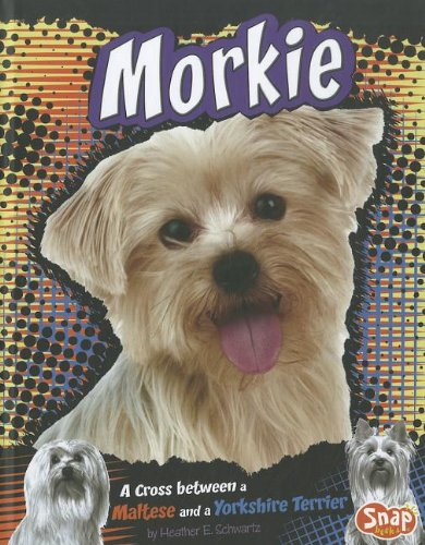9781429676687: Morkie: A Cross Between a Maltese and a Yorkshire Terrier (Snap)