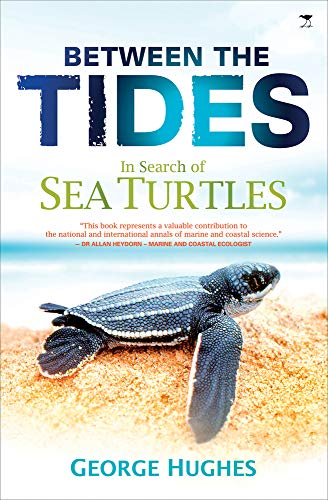 9781431405626: Between the Tides: In Search of Sea Turtles