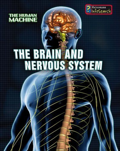 9781432909109: The Brain and Nervous System (The Human Machine)