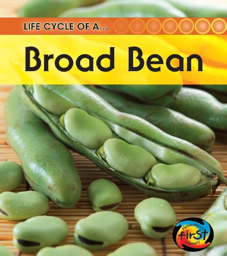 9781432925185: Bean (2nd Edition) (Life Cycle of a . . .)