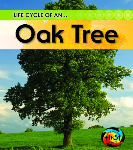 9781432925314: Life Cycle of An...Oak Tree