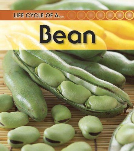 9781432925352: Broad Bean (Life Cycle of a . . .)
