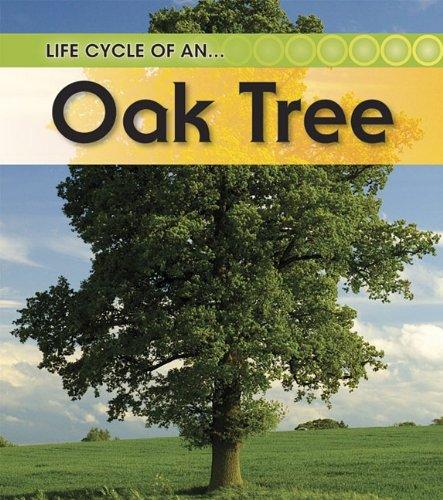 9781432925482: Oak Tree (Life Cycle of a .)