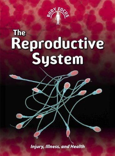 9781432934347: The Reproductive System (Body Focus)