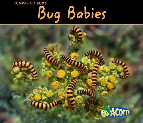 9781432935795: Bug Babies (Comparing Bugs)