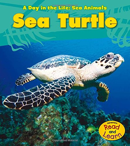 9781432940089: Sea Turtle (A Day in the Life: Sea Animals)