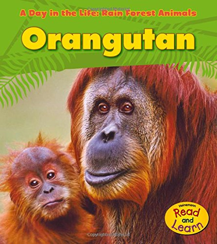 9781432941185: Orangutan (A Day in the Life: Rain Forest Animals)
