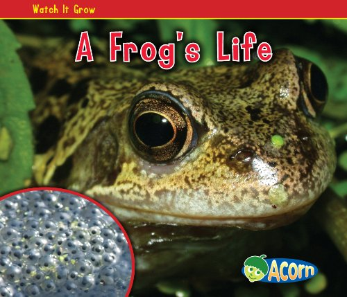 9781432941406: A Frog's Life (Watch It Grow)