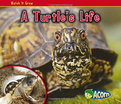 9781432942342: A Turtle's Life (Watch It Grow)