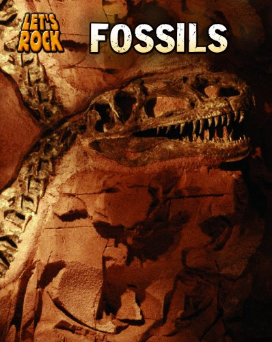 9781432946906: Fossils (Let's Rock)