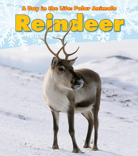 9781432953300: Reindeer (A Day in the Life: Polar Animals)