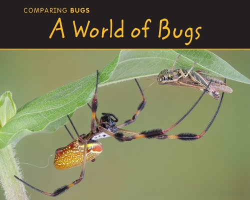 A World of Bugs (Comparing Bugs: Acorn: Charlotte Guillain
