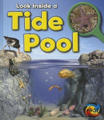 9781432971977: Tide Pool: Look Inside