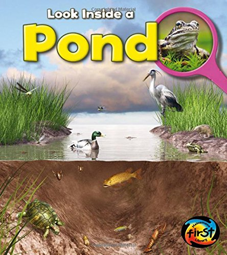 9781432972035: Pond: Look Inside