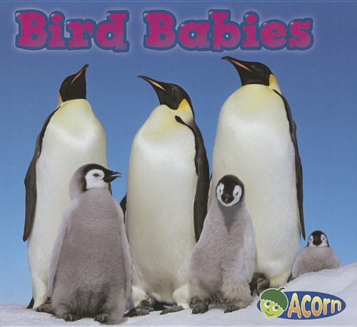 9781432974923: Bird Babies (Animal Babies)