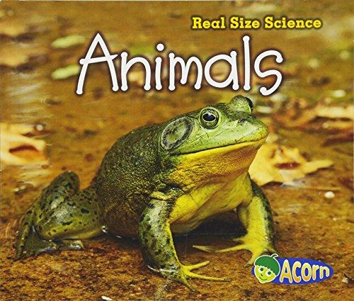 Animals: Real Size Science: Rissman, Rebecca