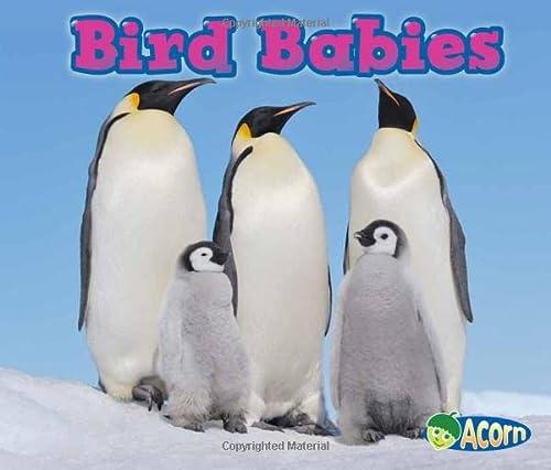 9781432984175: Bird Babies (Animal Babies)
