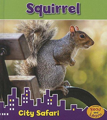 Squirrel: City Safari: Isabel Thomas