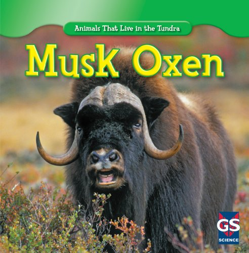 9781433939037: Musk Oxen (Animals That Live in the Tundra)