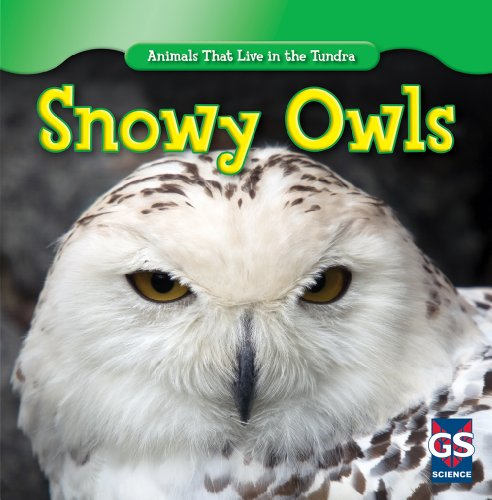 Snowy Owls (Animals That Live in the Tundra): Roman Patrick
