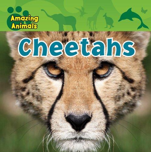 9781433940118: Cheetahs (Amazing Animals)
