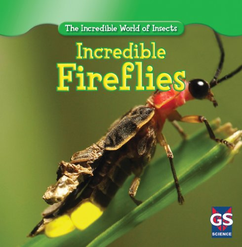 9781433945847: Incredible Fireflies (Incredible World of Insects)