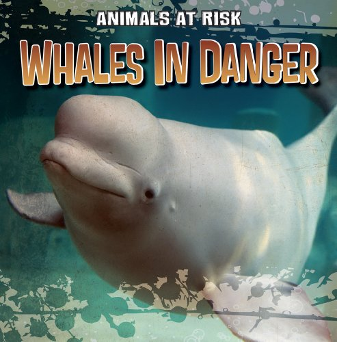 9781433958168: Whales in Danger (Animals at Risk)