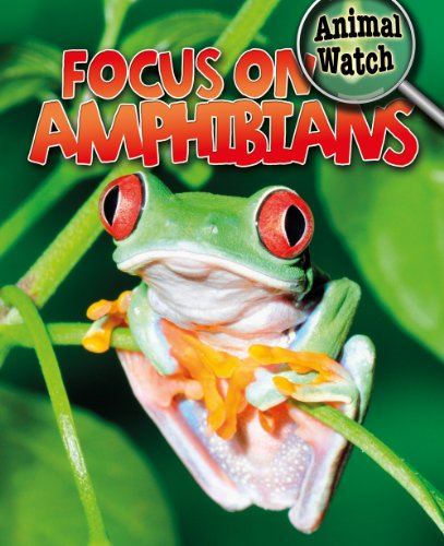 Focus on Amphibians (Animal Watch): Savage, Stephan