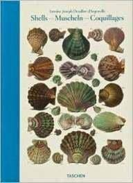 Shells Muscheln Coquillages--Conchology or The Natural History of Sea, Freshwater, and Terrestrial ...