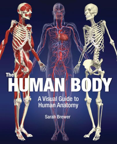 9781435132436: The Human Body: A Visual Guide to Human Anatomy