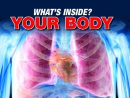 9781435153646: What's Inside Your Body?