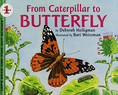 9781435263635: From Caterpillar to Butterfly (Let's-Read-and-Find-Out Science)