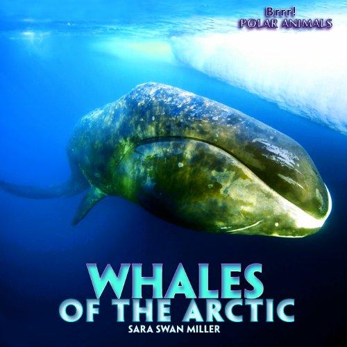 9781435827431: Whales of the Arctic (Brrr! Polar Animals)