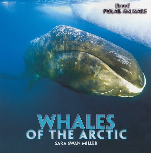 Whales of the Arctic (Brrr! Polar Animals): Miller, Sara Swan