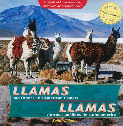 9781435833883: Llamas y otros camelidos de Latinoamerica / Llamas and Other Latin American Camels (Animals of Latin America / Animales De Latinoamerica) (English and Spanish Edition)