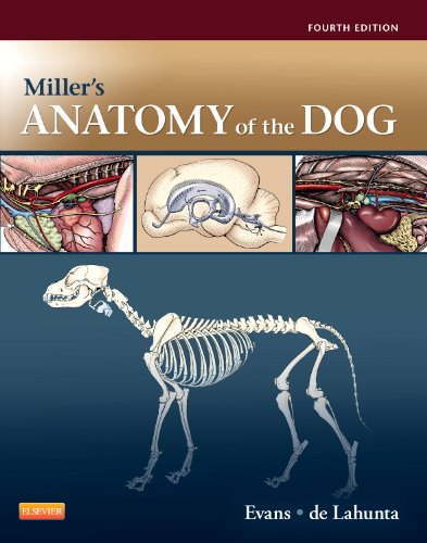 Miller's Anatomy of the Dog, 4e: Evans PhD, Howard