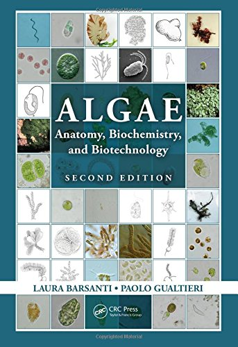 Algae: Anatomy, Biochemistry, and Biotechnology, Second Edition: BARSANTI, LAURA; GUALTIERI,